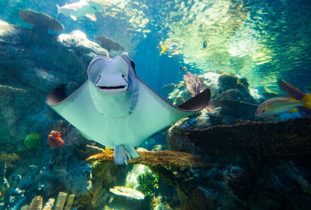 Image result for aquarium of the pacific